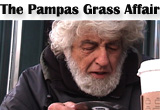 The Pampas Grass Affair